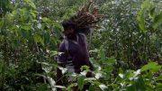 Sri Lankan Fairtrade Cinnamon