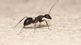 5 Pro Natural Solutions for Killing and Deterring Ants
