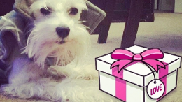 Unique Gifts Ideas for Dog Lovers