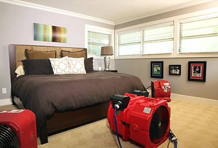 How to get rid of bed bugs Heat treatment
