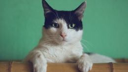 Why Your Cats Need Insurance