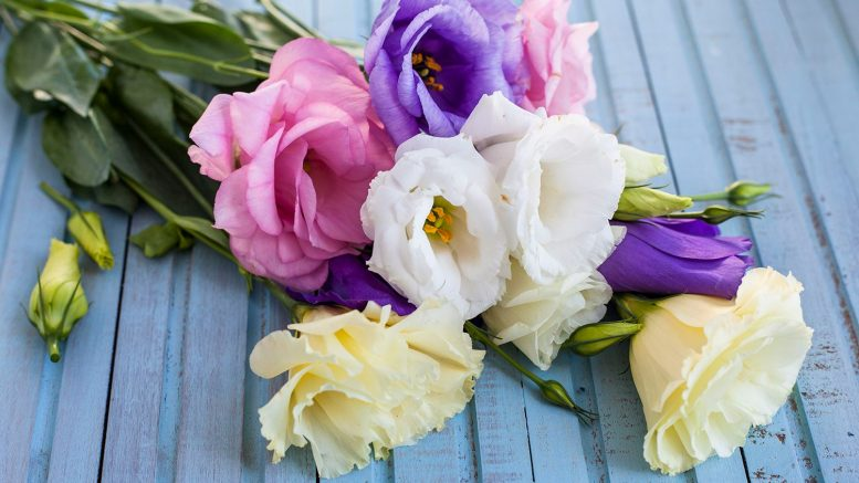 Special Occasions: Tips for Choosing the Perfect Flower Arrangement
