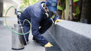 Why Invest in a Professional Pest Control Service